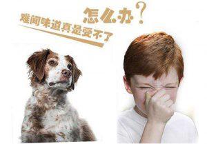 控制宠物气味