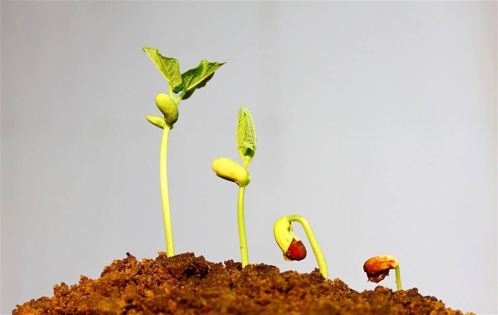 如何储存种子?