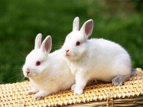 如何帮助兔子安度回南天