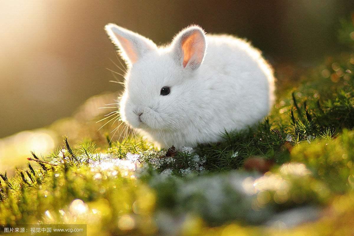 怎么让兔子度过高死亡率的梅雨季?