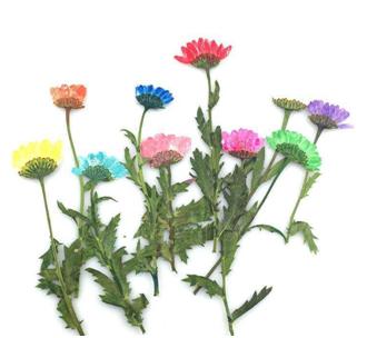 梅雨季干花怎样保存不会发霉?