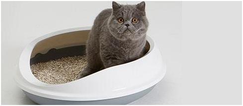 原来猫砂也会受潮