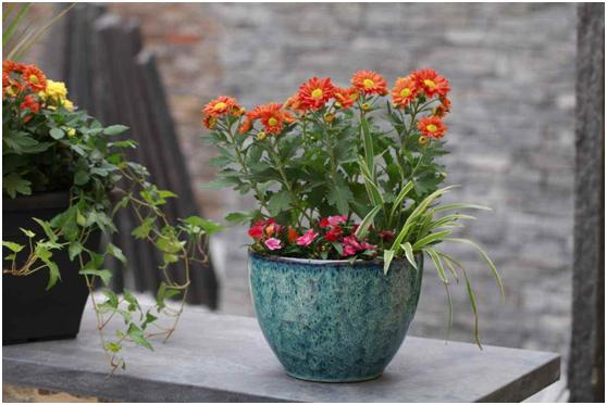 植物潮湿使用除湿机